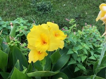 2021Sep26-Flower1 - 1.jpeg