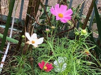 2021Sep26-Flower3 - 1.jpeg