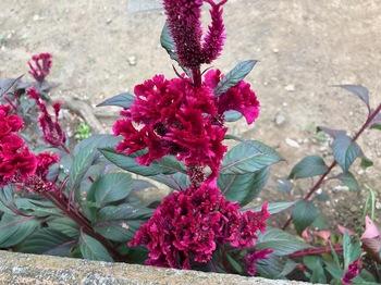 2021Sep26-Flower5 - 1.jpeg